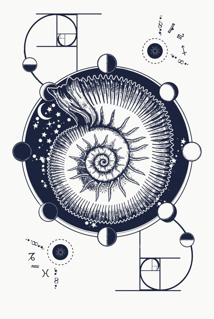 Аммониты – мое уважение к истории Вселенной